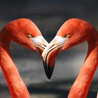 Flamingo_200x200